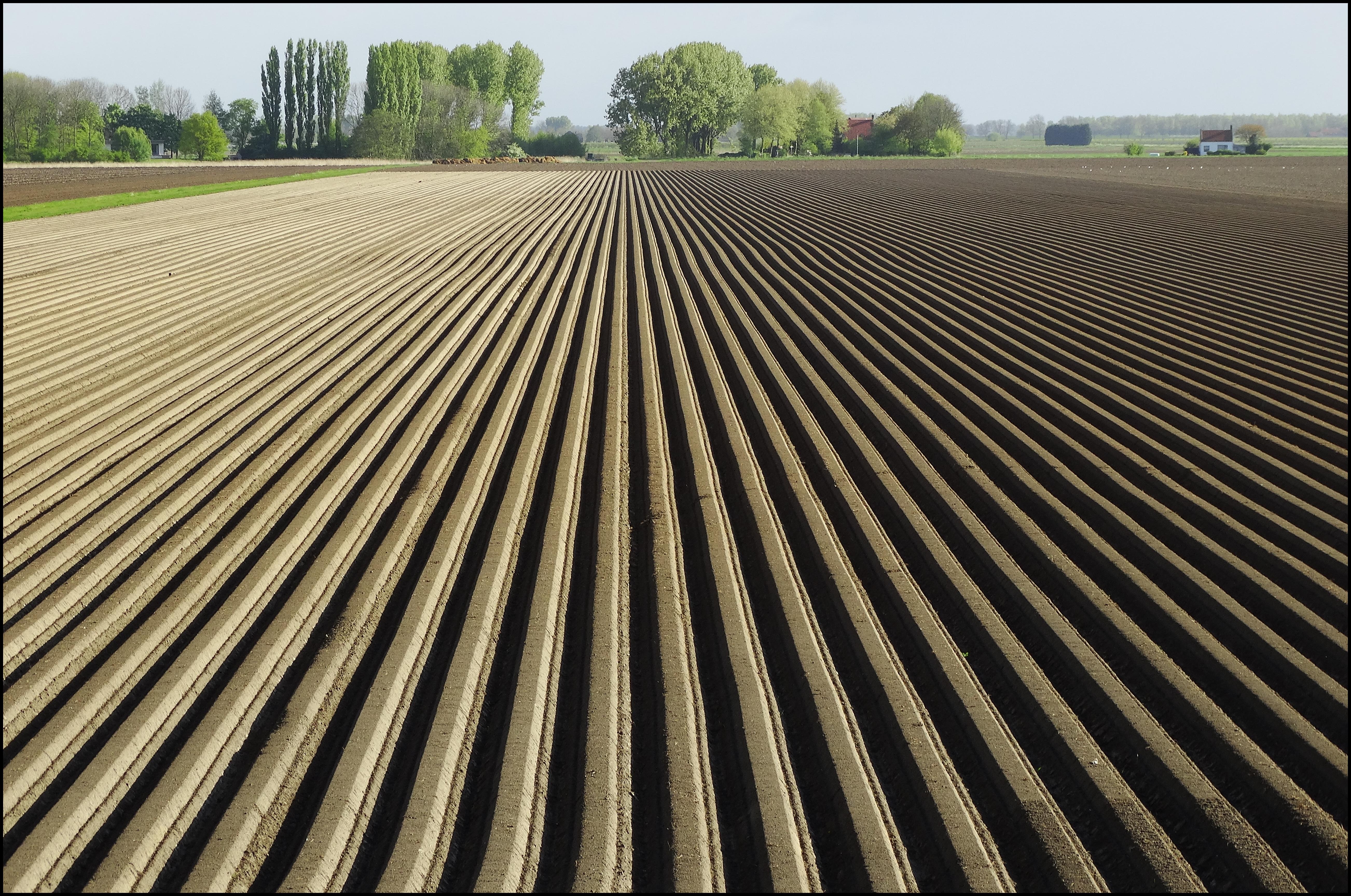 NAV bezig om aardappeltelers te verenigen